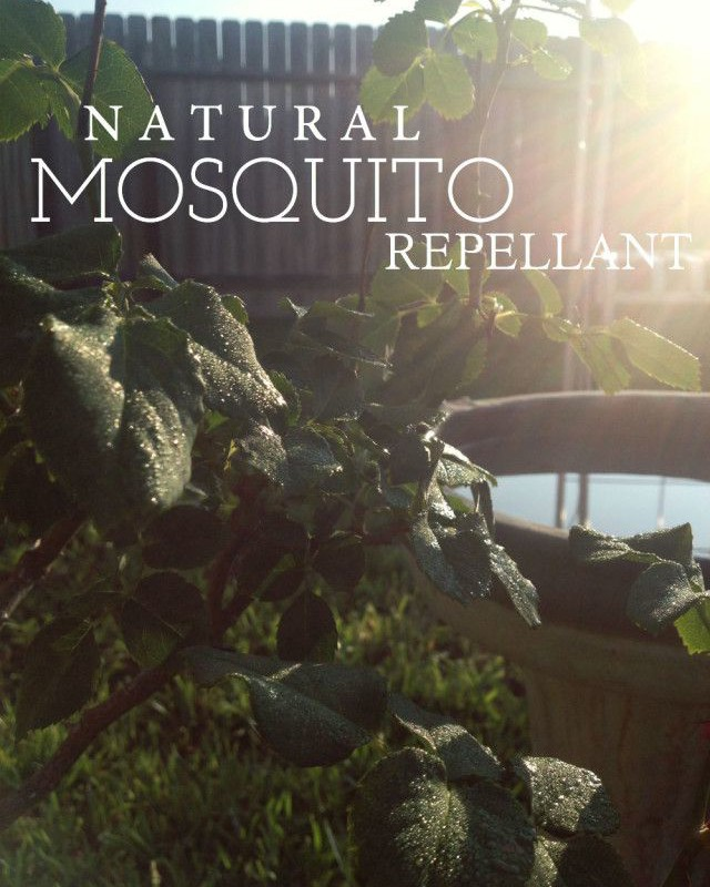 Natural Mosquito Repellants